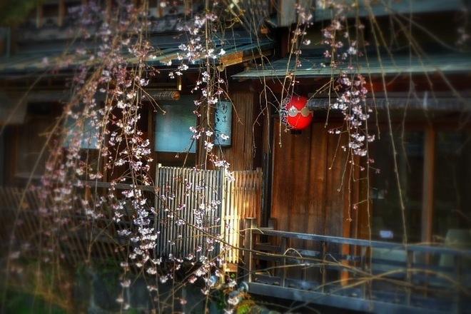 祇園新町しだれ桜.JPG